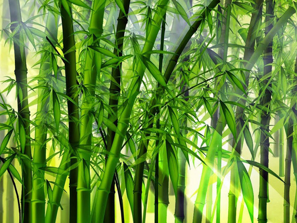 Como cuidar una planta de bamb y consejos para cuidarlos - Bambu planta exterior ...