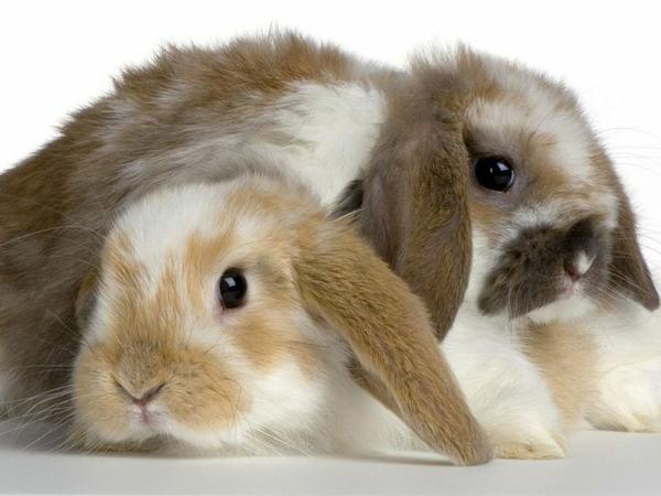 ConejosCriadero