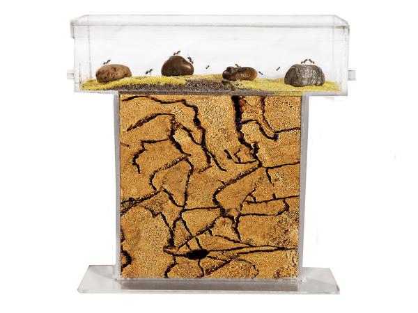 Como hacer un hormiguero casero - Como acabar con las hormigas en el jardin ...