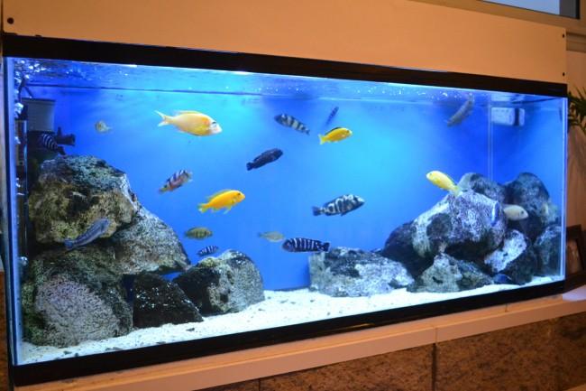 C mo instalar una pecera en tu hogar sensacional for Peceras con peces