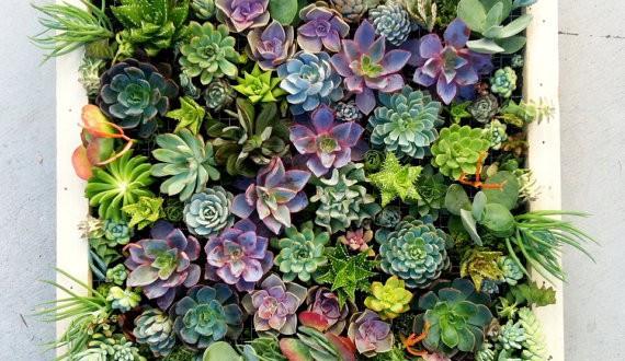 jardincuadro-570x330