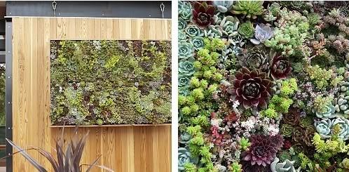 jardincuadro,design,diseño,fachadavegetal,jardínvertical,plantascrasas-78cbf926b2c158af46ccf56cc25a6e1c_h