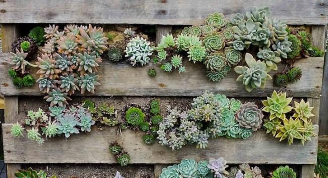 jardindd-vertical