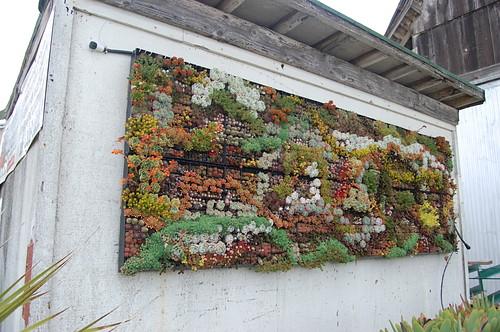 jardinnature,crasas,jardínvertical,suculentas,verticalgarden-42178b4055207628862cbb9b69b160d7_h