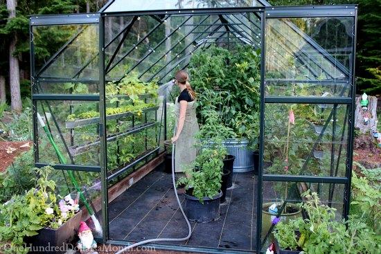 backyard-greenhouse-vegetables_2183_550_367