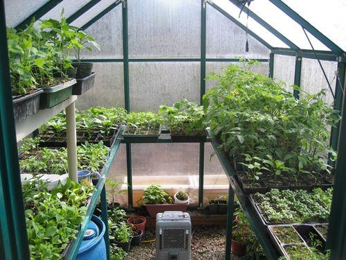 Montar un peque o invernadero en el jardin for Plantas para invernadero