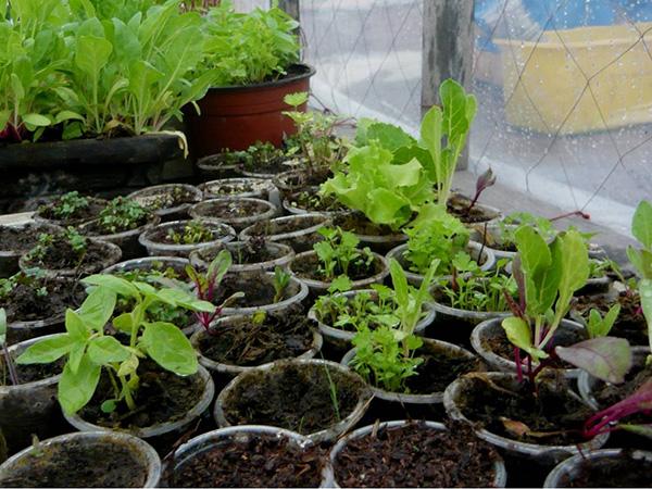 C mo hacer un peque o invernadero en casa for Plantas para invernadero