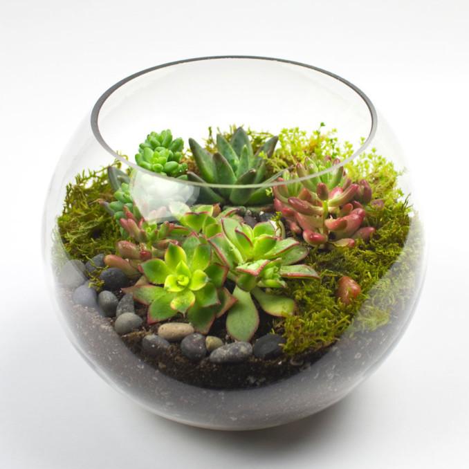 Como Construir Un Terrario Para Plantas Con Material Reciclado Mini - Terrario-para-plantas