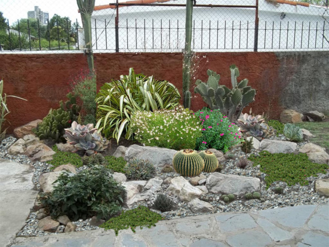 Como instalar rocallas en nuestro jard n for Plantas para rocallas