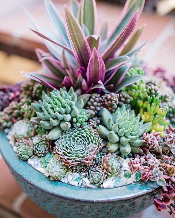 Como hacer rocallas en macetas peque as y grandes - Cactus en macetas pequenas ...