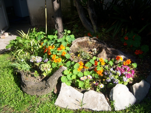 Decoraci n de jardines con rocallas grandes y peque as for Decoracion de jardines grandes