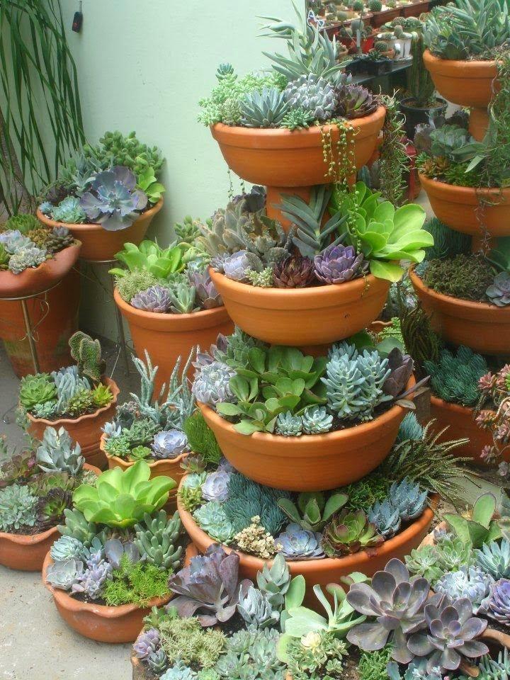 C mo realizar un mini jard n en maceta con plantas suculentas - Macetas de jardin ...