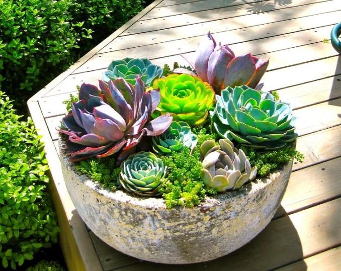 C mo realizar un mini jard n en maceta con plantas suculentas for Como decorar un jardin con plantas