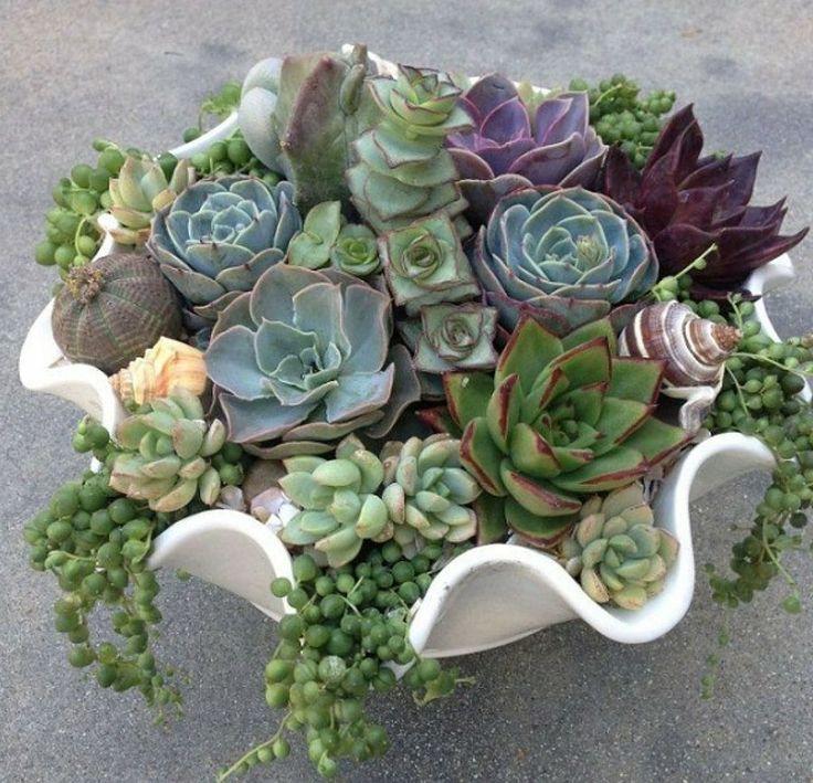 C mo realizar un mini jard n en maceta con plantas suculentas for Cactus cuidados exterior