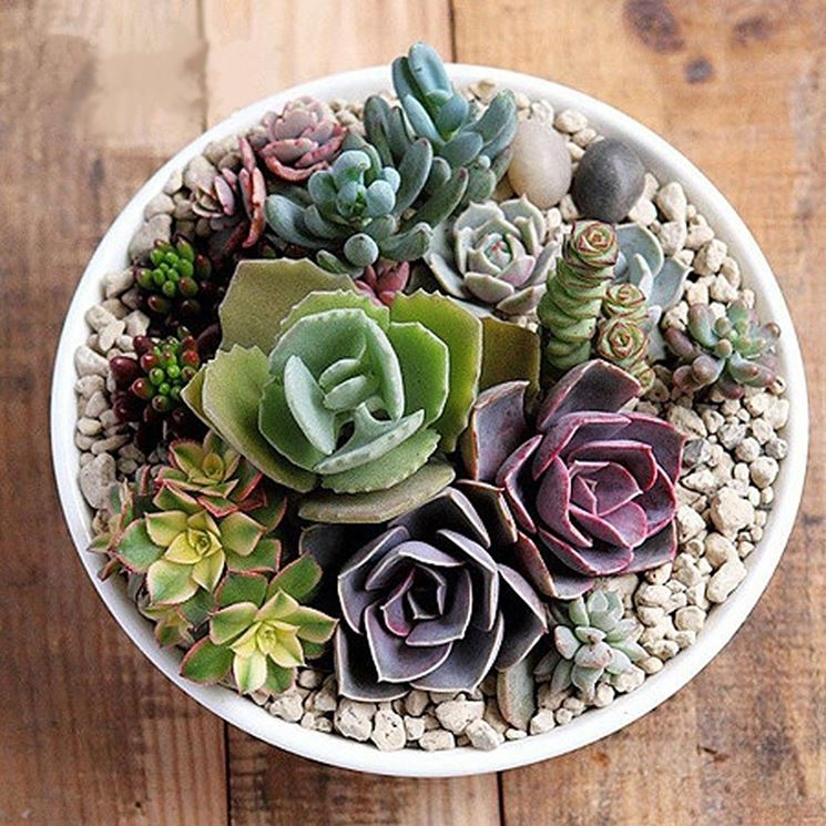C mo realizar un mini jard n en maceta con plantas suculentas - Composizione piante grasse da interno ...